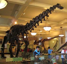 632pxapatosaurus
